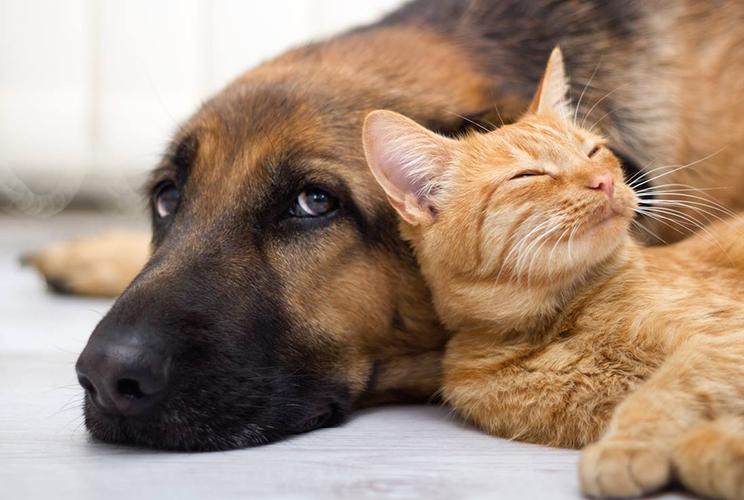 Assurances chiens/chats
