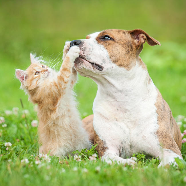 Assurance chiens chats